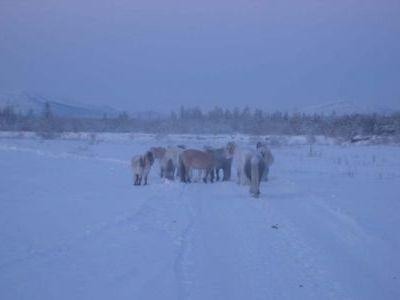 Лошадки упрямы как ослы - никак не уступали дорогу.