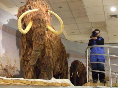 В музее мамонтов.