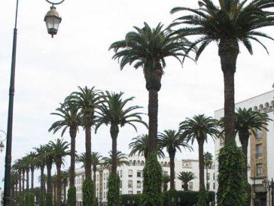 Центр столицы Марокко.