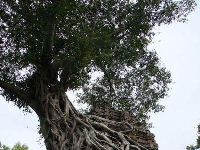 Остатки лесного храмового комплекса.