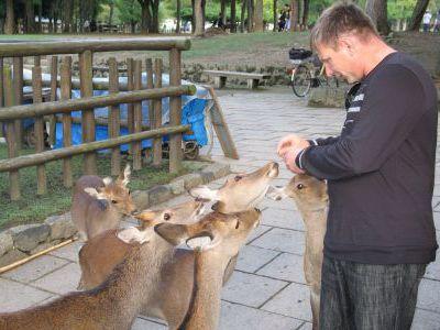 Ручные олени в одном из храмовых парков.