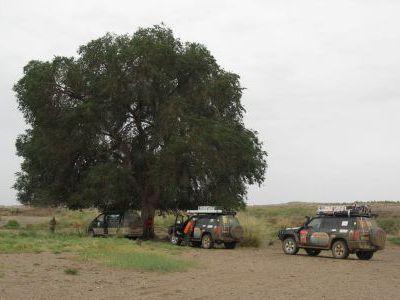 Оазис в пустыне с единственным деревом