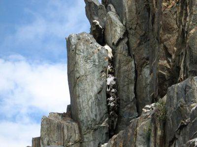Скала с огромным количеством костей животных.