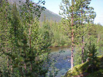 Красивая горная река, впадающая в оз. Гольцовое.