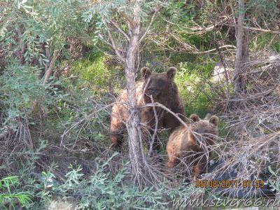 ... снять медведей - около 15 метров.