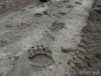 Вдоль трассы и в районе стоянок много медведей.